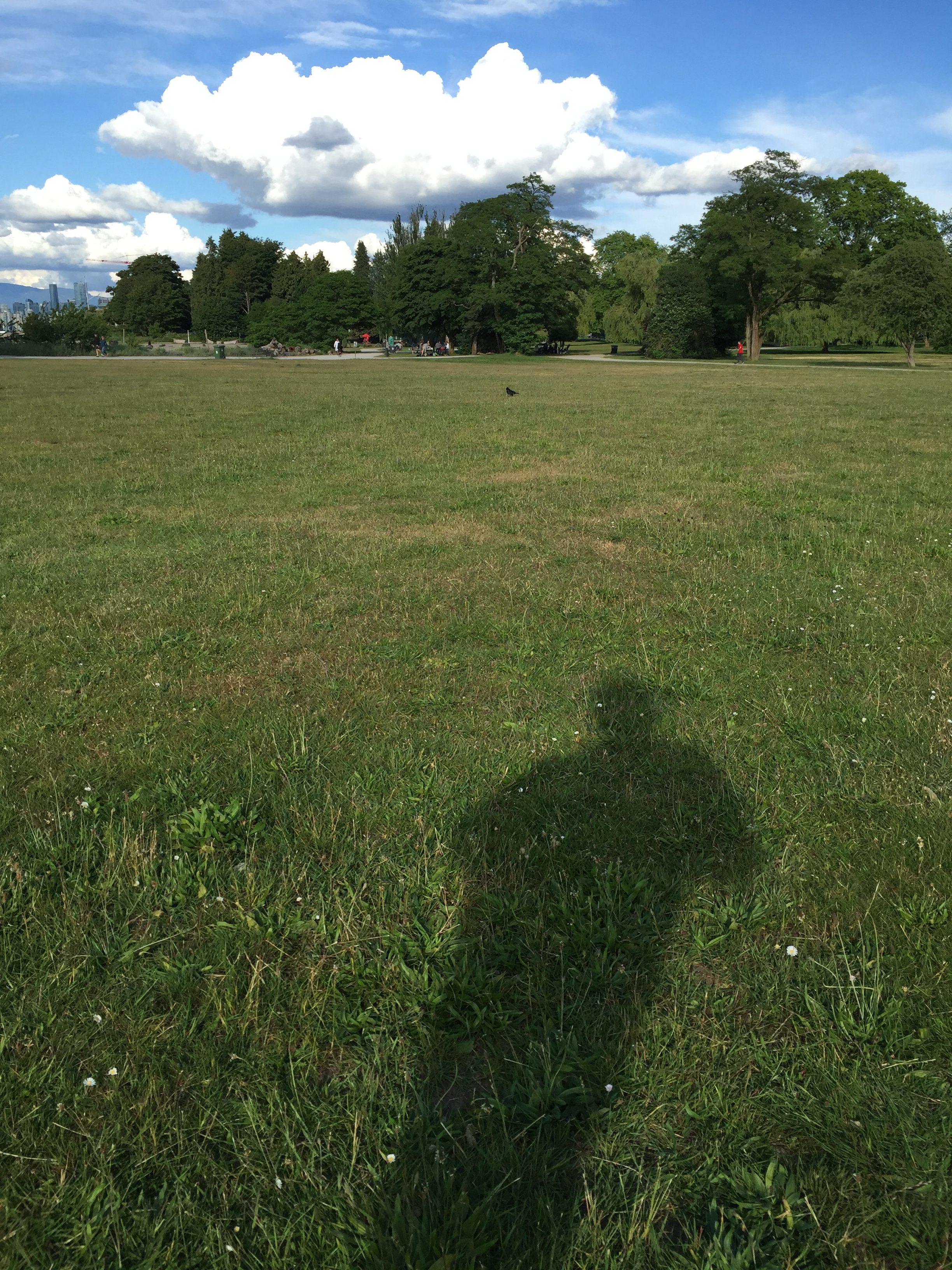 Summer Shadow